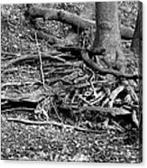 Scary Roots Acrylic Print