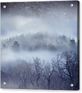 Scary Trees Acrylic Print by Ric Soulen