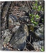 Scattered Acrylic Print