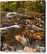 Scattered Leaves Acrylic Print