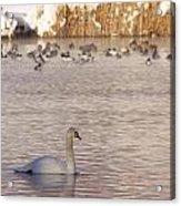 Scene At The Lake Acrylic Print