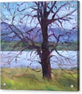 Scenic Landscape Painting Through Tree - Spring Has Sprung - Color Fields - Original Fine Art Acrylic Print