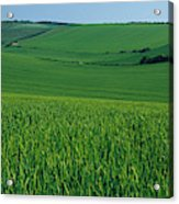 Scenic View Of A Field, South Downs Acrylic Print