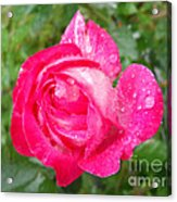 Scented Rose Acrylic Print