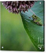 Schlitz Audubon Tree Frog Acrylic Print
