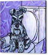 Schnauzer In The Bathroom Acrylic Print by Jay  Schmetz