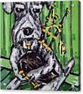 Schnauzer Playing Bagpipes Acrylic Print by Jay  Schmetz