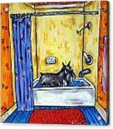 Schnauzer Taking A Bath Acrylic Print by Jay  Schmetz