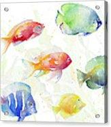 School Of Tropical Fish Acrylic Print