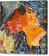 Scioto River Leaves Series 1 Acrylic Print