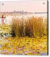 Scirpus In The River Acrylic Print