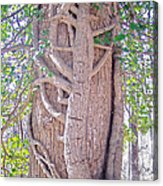 Scorpion Tree Acrylic Print