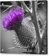 Scotland Calls 2 Acrylic Print