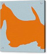 Scottish Terrier Orange Acrylic Print by Naxart Studio