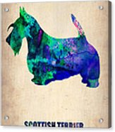 Scottish Terrier Poster Acrylic Print by Naxart Studio