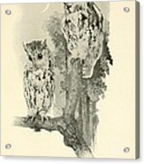 Screech Owls Acrylic Print