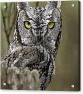 Screen Owl Acrylic Print
