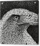 Scribble Eagle Acrylic Print