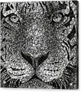 Scribble Tiger Acrylic Print