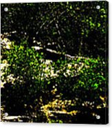 Scrubland Texas Acrylic Print