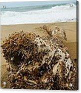 Sea Creature Acrylic Print