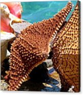 Sea Creatures Acrylic Print