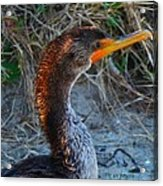 Sea Duck Acrylic Print