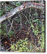 Sea Grape Jungle Acrylic Print