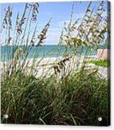Sea Grass Acrylic Print