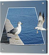 Sea Gull Away Out Of Bounds Acrylic Print