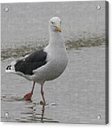 Sea Gull On The Beach At Oceanside California Acrylic Print