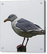 Sea Gull On The Dock On A Foggy Day Acrylic Print