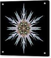Sea Holly I Flower Mandala Acrylic Print