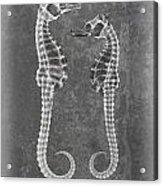 Sea Horses Sea Shell X-ray Art Acrylic Print
