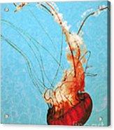 Sea Jelly Acrylic Print by Sharon Coty