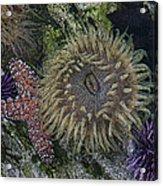 Sea Life Acrylic Print