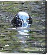 Sea Lion 2 Acrylic Print