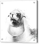 Sea Lion Abstract Acrylic Print
