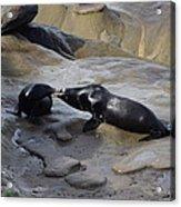 Sea Lion Kiss  Acrylic Print