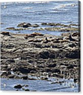 Sea Lion Resort Acrylic Print