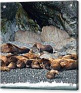 Sea Lions On The Sea Shore Acrylic Print