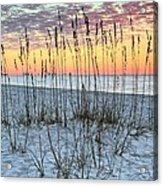 Sea Oat Sunrise Acrylic Print
