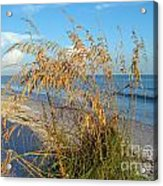 Sea Oats 2 Acrylic Print