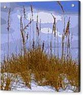Sea Oats Agaist A Blue Sky Acrylic Print