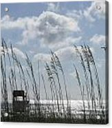 Sea Oats And Safety Acrylic Print