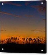 Sea Oats At Twilight Acrylic Print