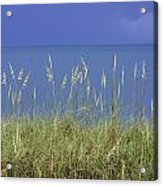 Sea Oats By The Blue Ocean And Sky Acrylic Print by Karen Stephenson