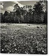 Sea Of Dandelion - Bw Acrylic Print