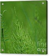 Sea Of Green Acrylic Print