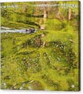 Sea Of Green Square Acrylic Print